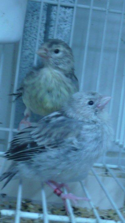 Bijna en al uit het nest !!!!!!!!!!
