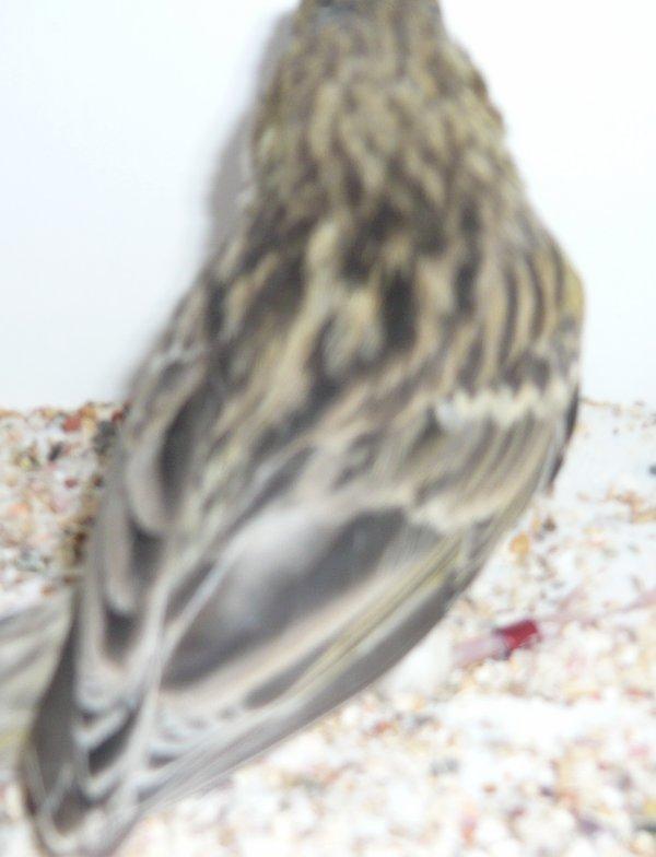 jonge vogels 2012
