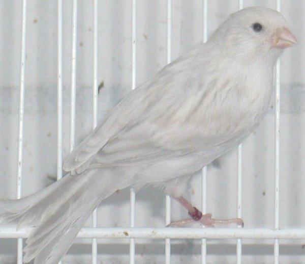 Kweek 2012   jonge vogels