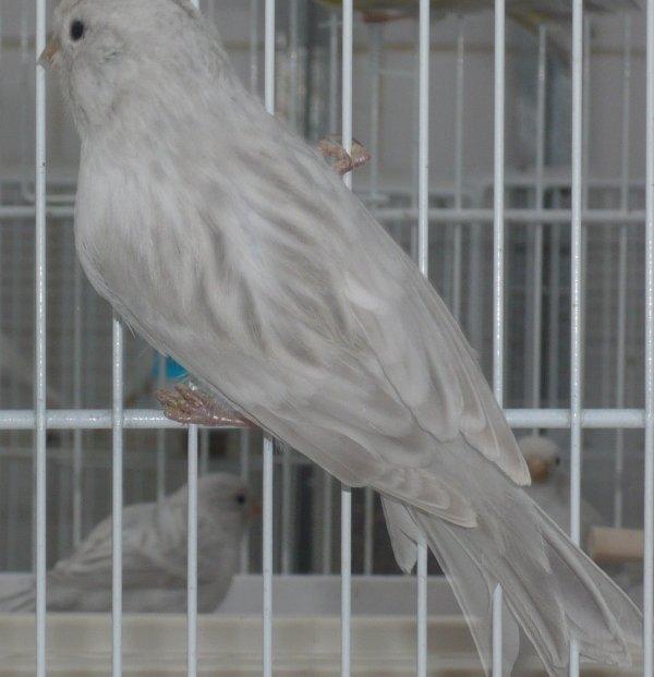 Jonge vogels (nieuwe foto's)