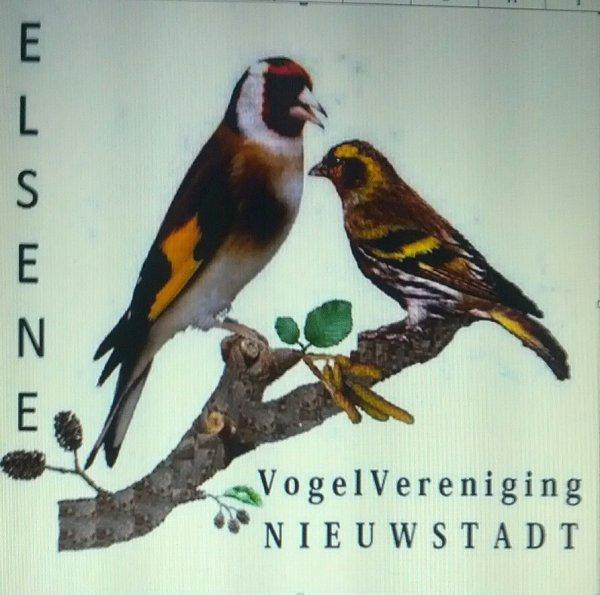 Onderlinge TT Elsene nieuw clubrecord  683 vogels ingeschreven.