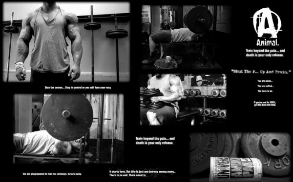 █--█ Musculation  █--█