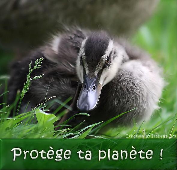 Protège ta planète !