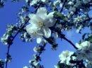 Photo de Small-Meadow