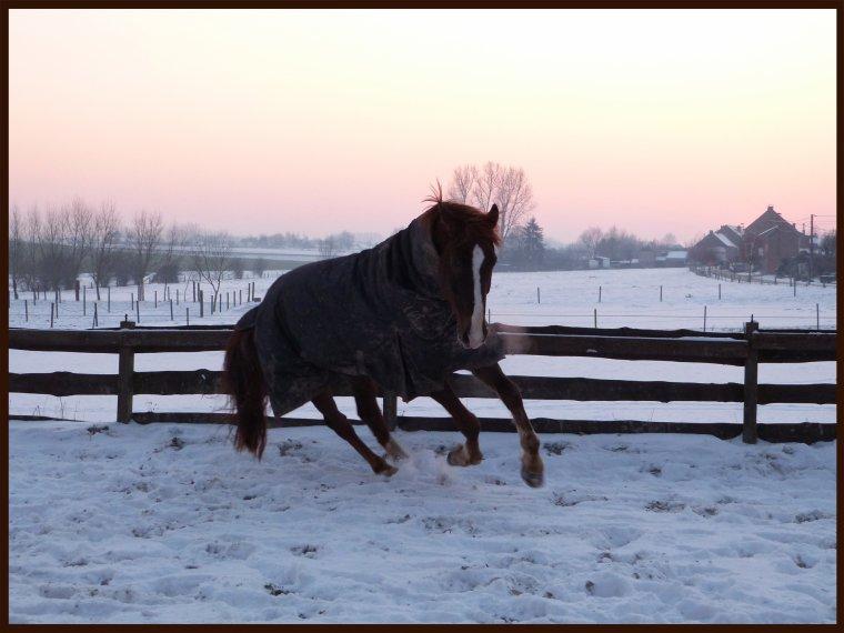 """"""" Mercredi 16 Janvier 2013 - Un paradis de neige """""""