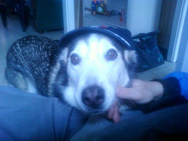voici mon chien chanel