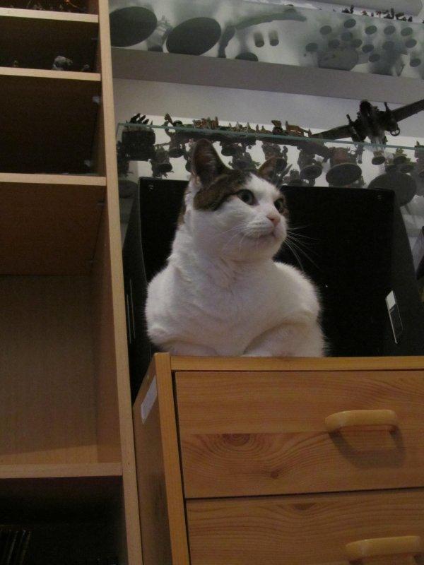 Un chat dans ma boite à photos!