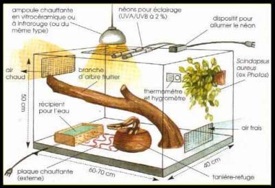 terrarium accessoires serpent