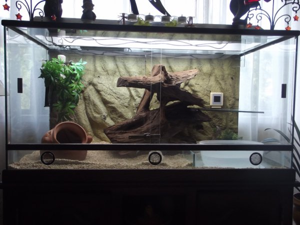 Terarium  version 2012