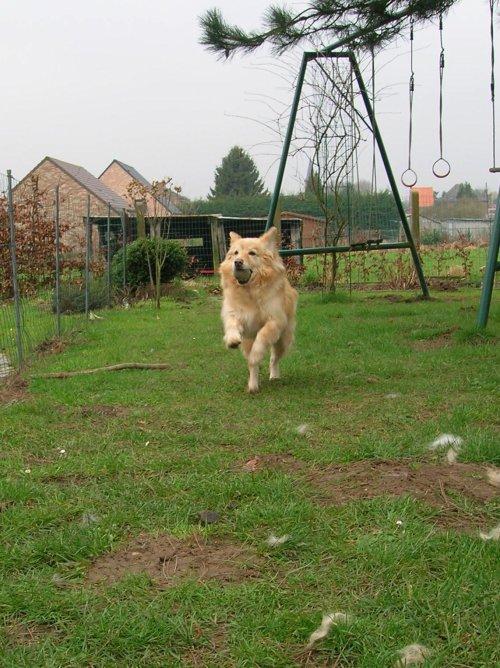 Mon chien ♥