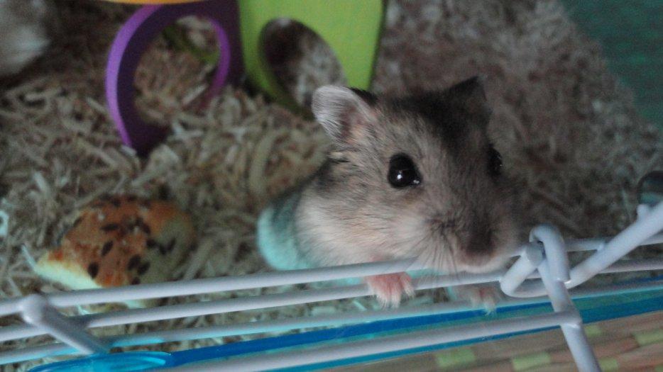 hamsters-dreams Smarties-Bounty-Pastille (l)