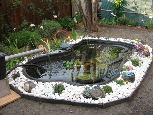Les poissons petite petite boite for Nettoyage bassin poisson rouge