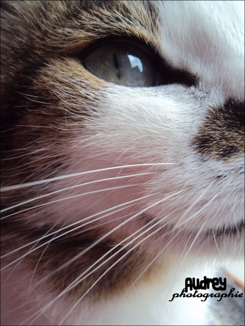 • Audrey - photogrαphie.