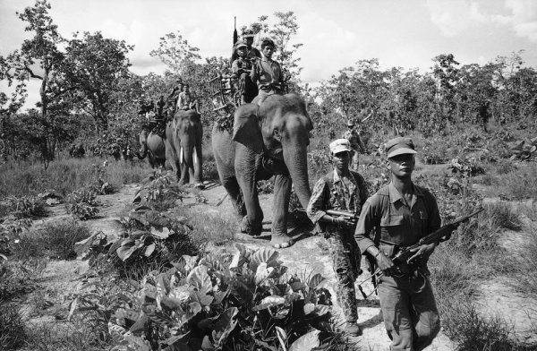 Les animaux à travers les guerres. Suite