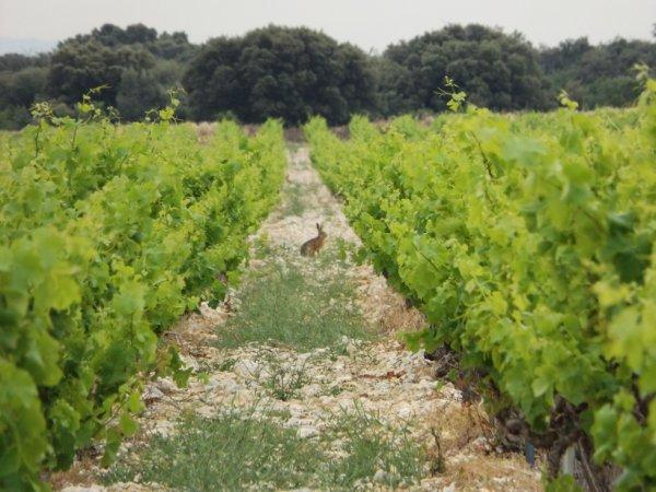 Belle rencontre au milieu des vignes...