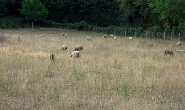paysage du Poitou
