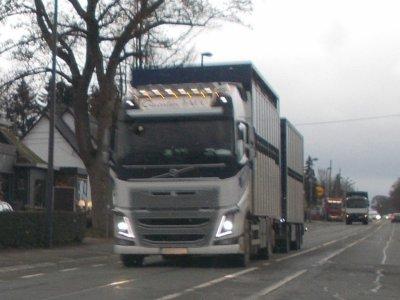 transport bétail