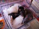 Photo de les-petites-rattes