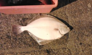 Une pêche de brigand ^^
