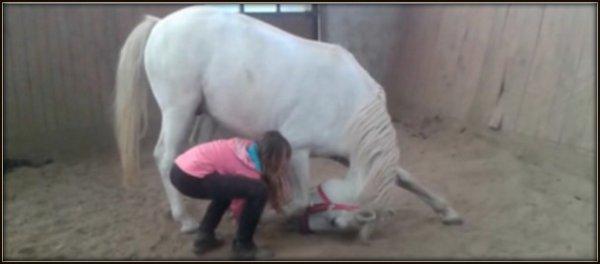Le cheval idéal n'est pas le cheval parfait, c'est juste celui dont on n'aime tout, même ses défauts