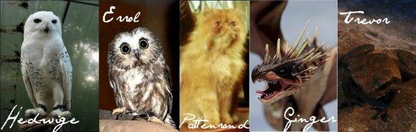 Animaux et créatures de compagnie