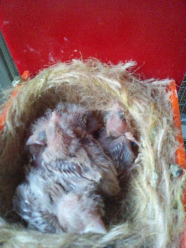 3 nids satine blanc Isabelle  blanc