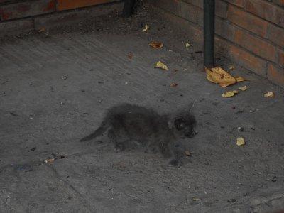 un autre chaton