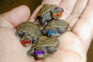 on as retrouvez les tortues ninja