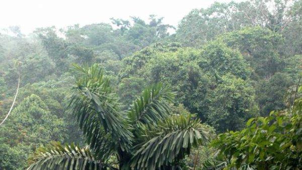 L'Equateur bat un record mondial... de reforestation