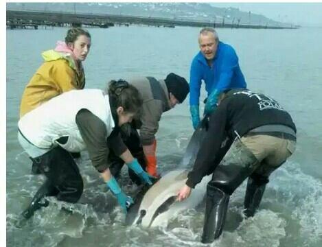 actualités sea Shepherd