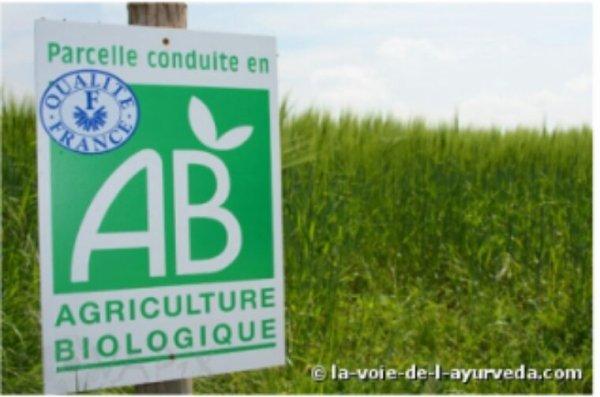L'agriculture biologique peut nourrir la planète et sans l'abîmer