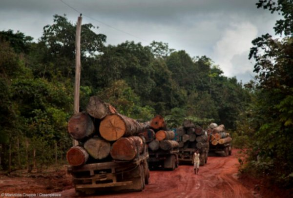 Amazonie : 451 millions d'arbres abattus l'an dernier
