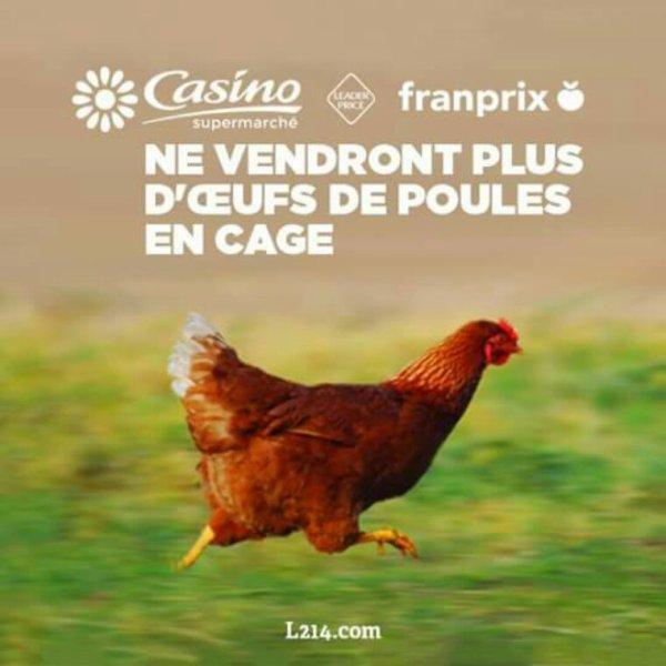 Actualité l 214 ece la fin des élevages de poules en cages
