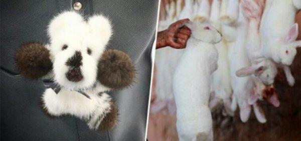 Les internautes choqués par une société Française de luxe qui propose des peluches pour enfants en véritable peau d'animaux