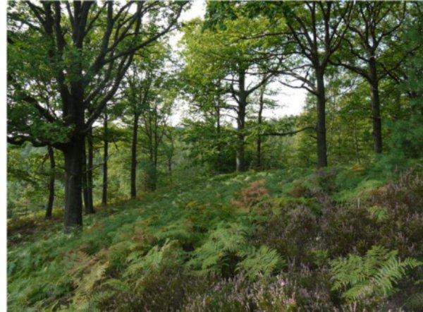 En France, des forêts classées sous la menace d'une exploitation minière