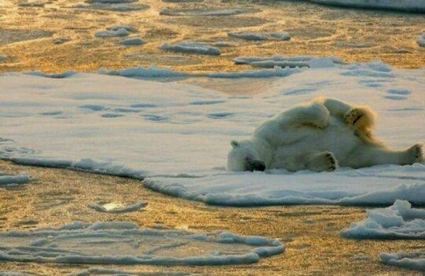 """L'impact du réchauffement climatique sur les animaux largement """"sous-estimé"""""""