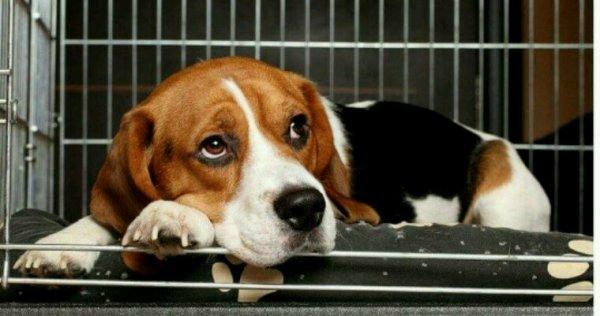 Pour abolir l'élevage industriel des animaux de compagnie, San Francisco prend une mesure forte !