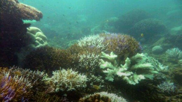 Amérique centrale: WWF lance un appel pour protéger le récif de corail du Bélize