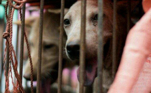 A l'approche des JO, la Corée du Sud ferme son plus grand marché de viande de chien