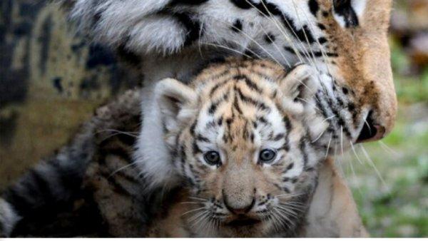 Près de 500 animaux morts en 4 ans: un zoo britannique menacé de fermeture