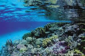 les récifs coraliens à Madagascar