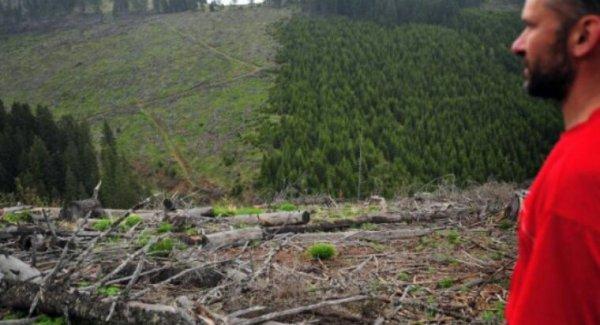 Les forêts de Roumanie mutilées par les trafics