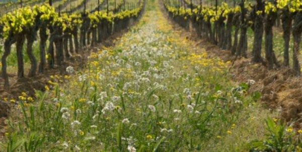Course Zéro Pesticide – Troisième manche : Quel distributeur prend la tête de la course ?