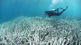 Le blanchiment des coraux