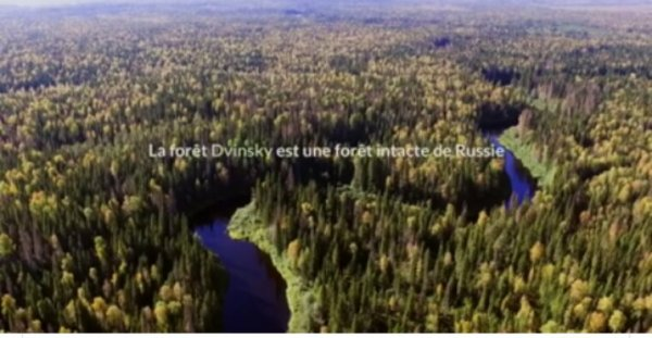 Actualité Greenpeace: La forêt de Dvinsky