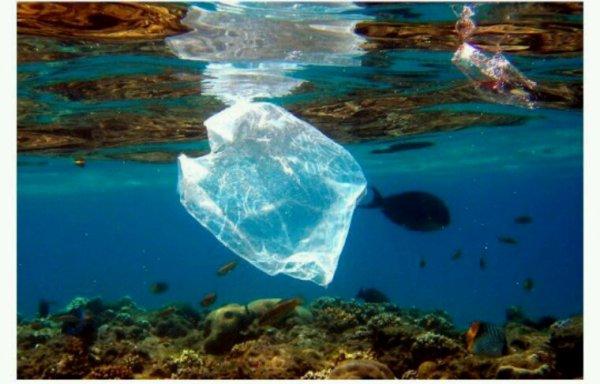 L'ONU lance une campagne pour lutter contre la pollution plastique des océans