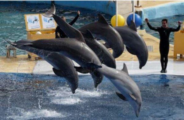 Les dauphins et les orques vont finalement voir leurs conditions de captivité améliorées