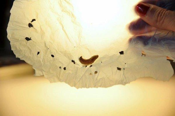 une solution pour lutter contre la pollution plastique