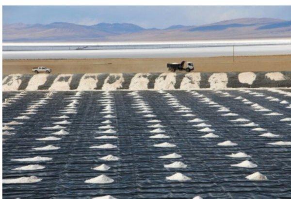Au Chili, le développement industriel menace la faune et la nature