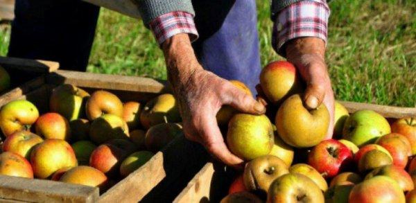 Pourquoi la France peut se passer des pesticides.